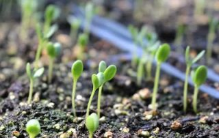News & Blog - Seedlings in dirt