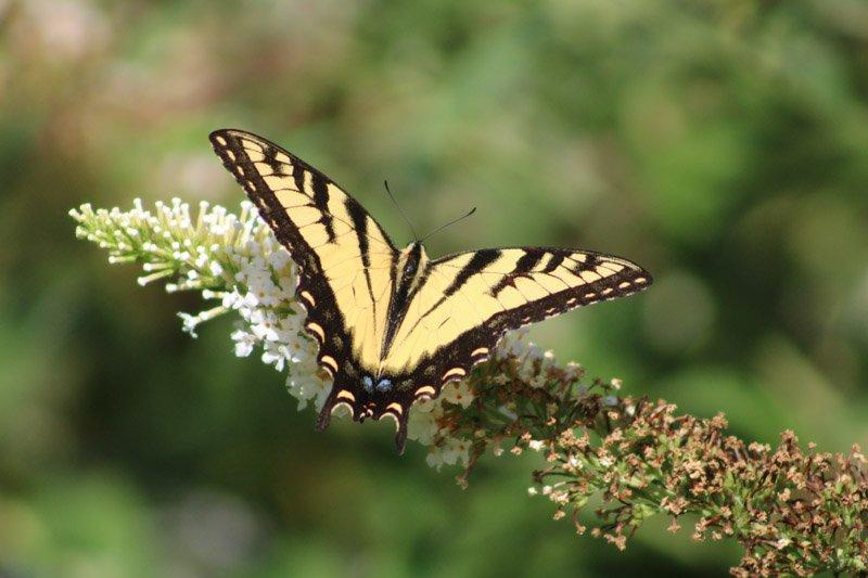 Butterfly in Garden of the Senses