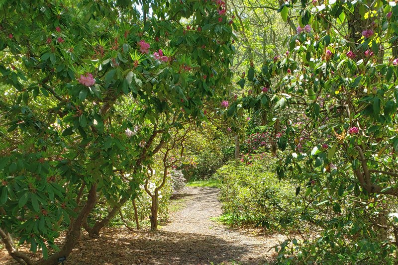 Nature Trails in Cape Cod