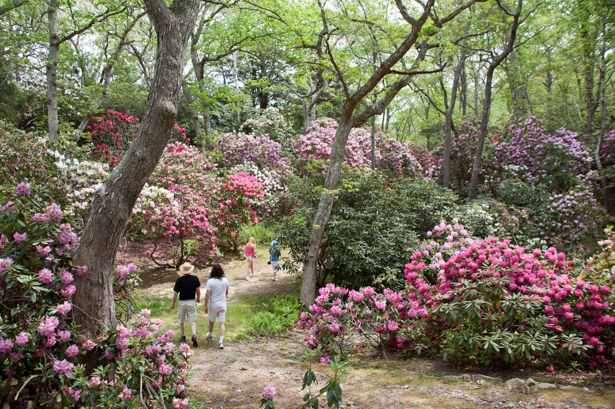 Tickets for Heritage trail Rhododendron