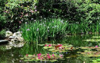 Flume Fountain pond