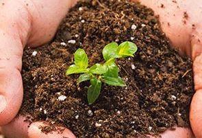News & Blog - Seedling in dirt