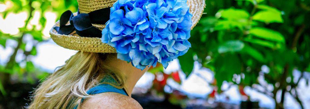 Hydrangea in hat